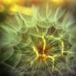 Meditazione e respiro… rilassamento profondo