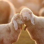 Alimentazione Vegetariana: il Cibo della Non-Violenza