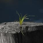 Ritrova la Speranza! Rinnova il tuo futuro